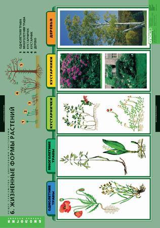 общее знакомство с растениями биология